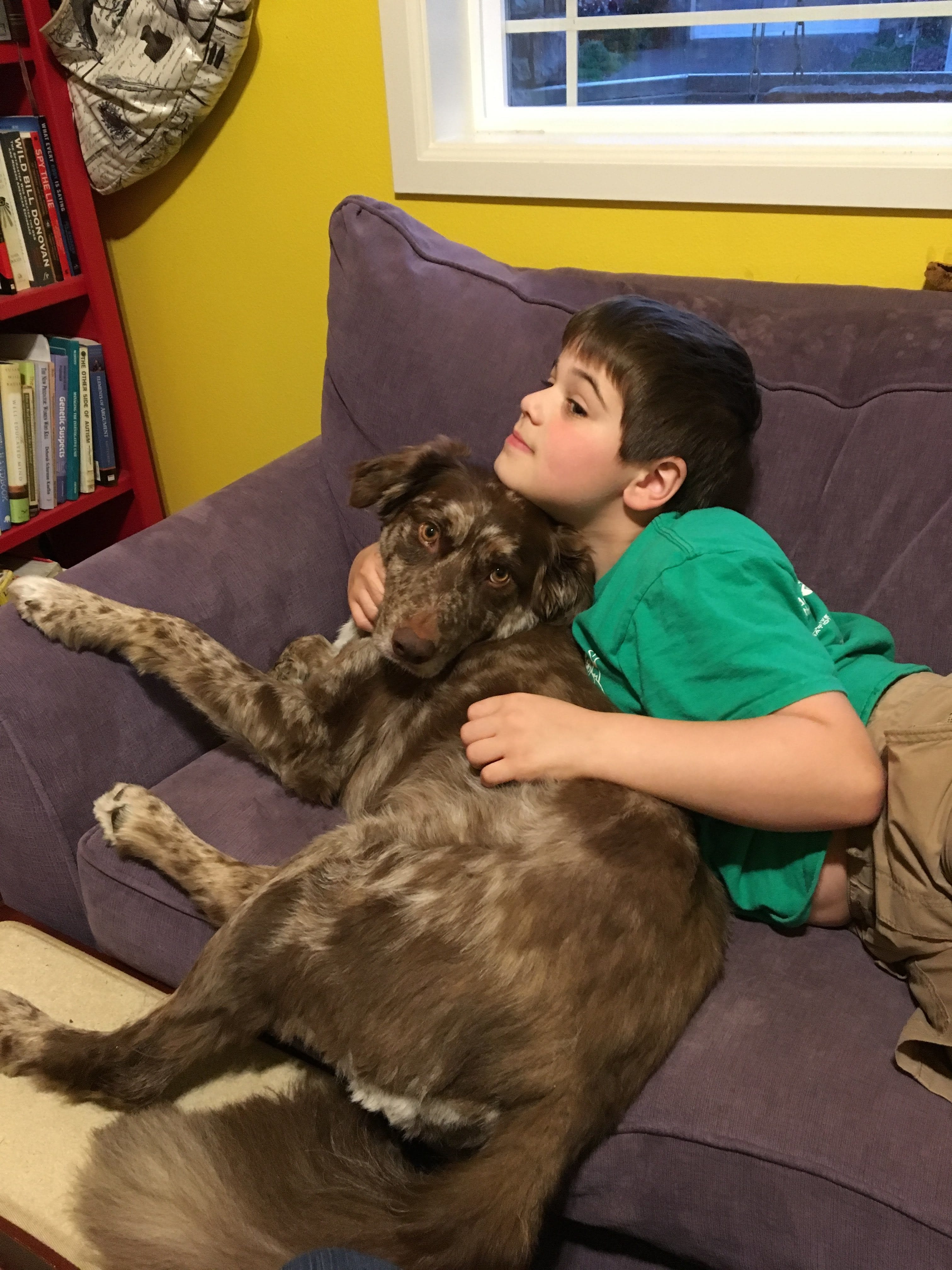 Image of a young boy laying on a brown dog on a couch.