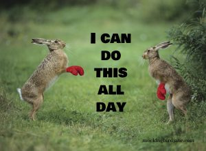 """Image of two rabbits wearing boxing gloves who appear to be fighting. Captioned, """"I could go all day..."""""""