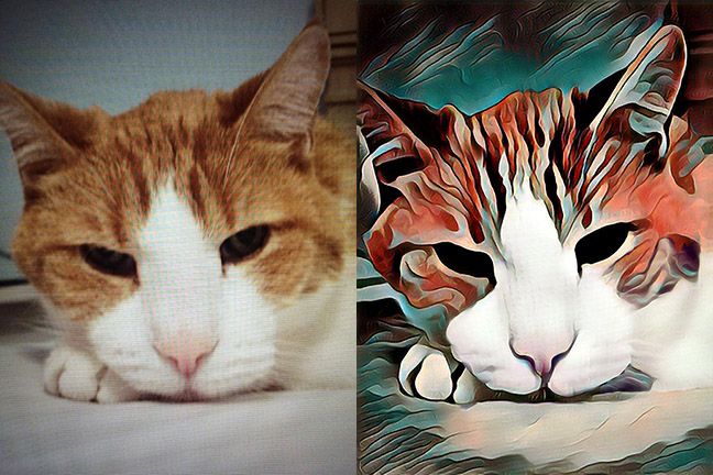 Before and after images of a stylized cat's face.