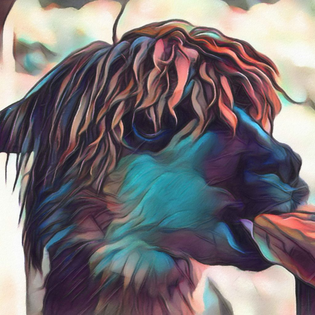 Close up image of a llama chewing on a table in vibrant blues and reds